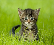 Even your cat can go green: Green Tips for Beginners